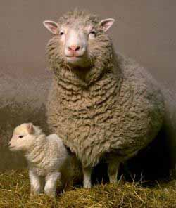 """an introduction to the history of dolly the lamb A summary of """"the lamb"""" in william blake's songs of innocence and experience learn exactly what happened in this chapter, scene, or section of songs of innocence and experience and what it means."""