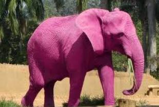 Самые необычные мифические животные