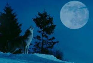 Волки - вожди серых дружин