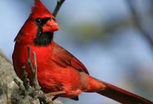 Самые красивые в мире птицы