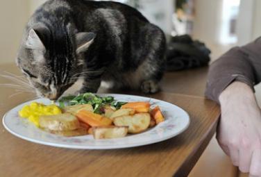 Как правильно кормить домашних животных