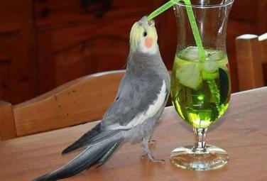 Звери - любители выпить