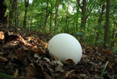 Самые необычные грибы в мире