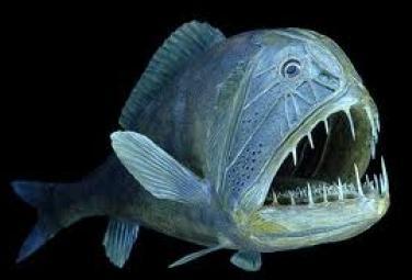 Самые страшные морские чудовища